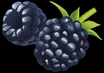 Черная малина