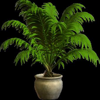 Домашнее растение в горшке