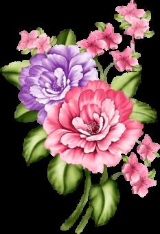 цветы красивые