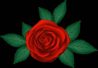 роза мультяшная