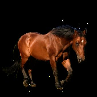 красивая лошадь