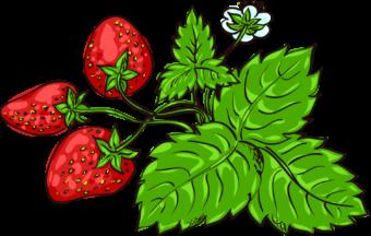 рисунок для детей клубничный куст
