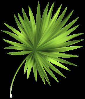 Стебель пальмы