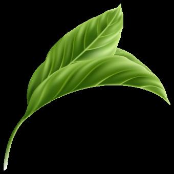 листья тропических растений