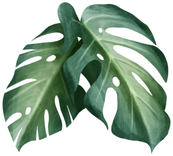 листья тропической пальмы